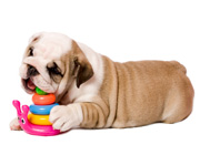 puppy creche daycare